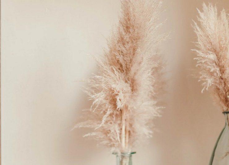 herbes-pampa-deco